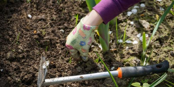 Gardening Digging In The Dirt To Harvest Stress Relief Msu Health4u