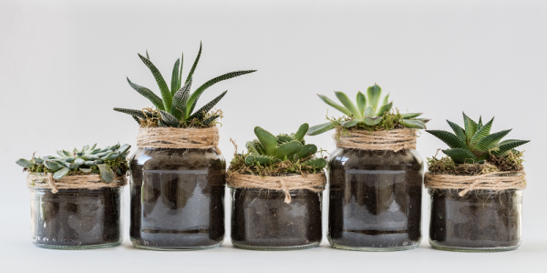 Gardening and Mental Health: Growing and Enjoying Succulent Plants